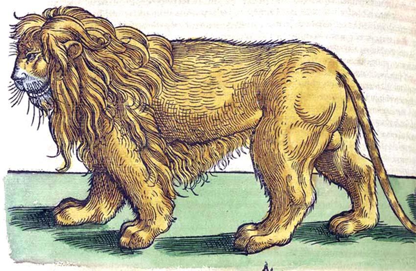 Ilustración de un león extraída de Historiae Animalium, la primera enciclopedia ilustrada de ciencias naturales.